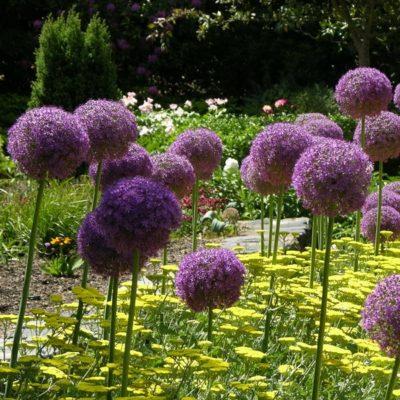 Graines de plantes vivaces et graines de fleurs vivaces for Les plantes vivaces