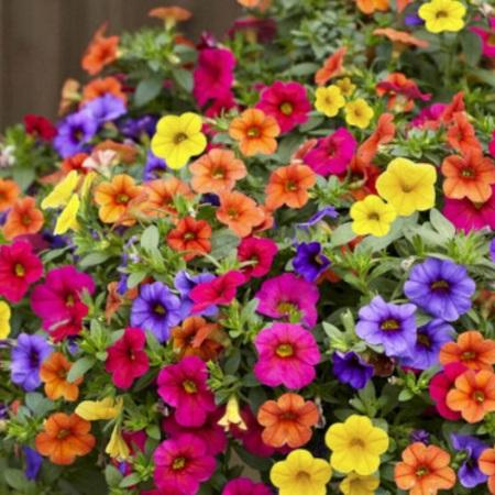 Quand faut-il semer les fleurs d'été ?