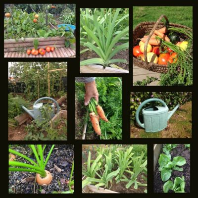 composition de légumes dans potager bio