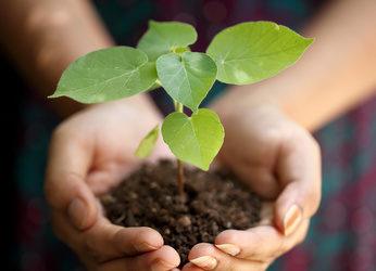 Comment lutter contre les maladies cryptogamiques des plantes