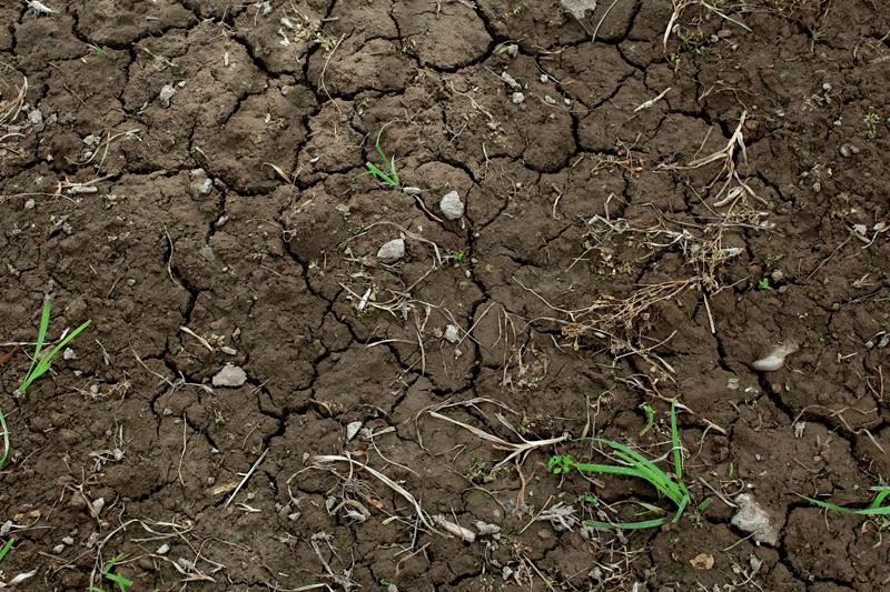 La gestion des mauvaises herbes en bio
