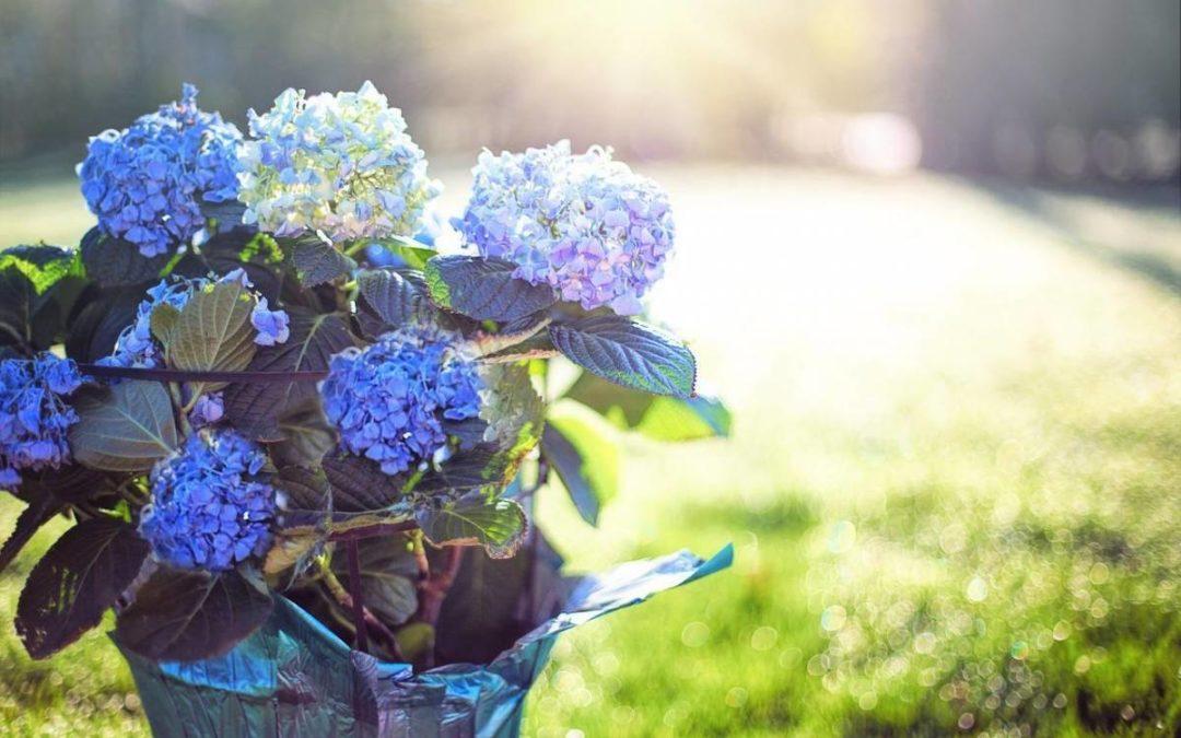Comment choisir les pots idéals pour vos fleurs ?